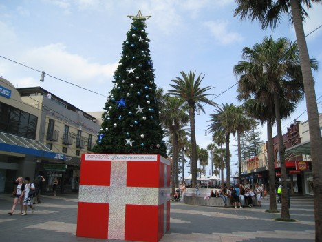 Christmas Tree among the Palms, Manly Corso