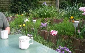 English Garden Blooms