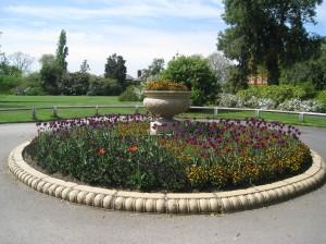 Tulips at Kew Gardens, London