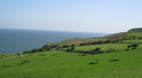Sheep on the hillside, Great Orme