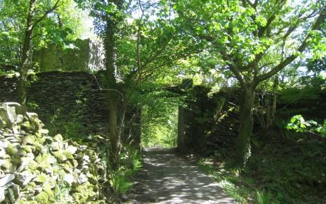 Coed Dinorwig, woodland path, Llanberis