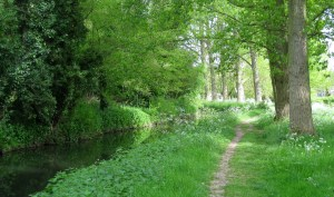 Gipping River Path, Suffolk