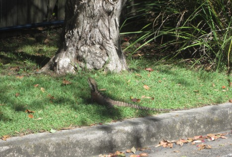 Creepy/friendly lizard camouflaging himself in the grass